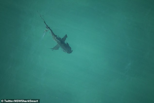 There have been a number of shark-related incidents in Ballina in the past decade