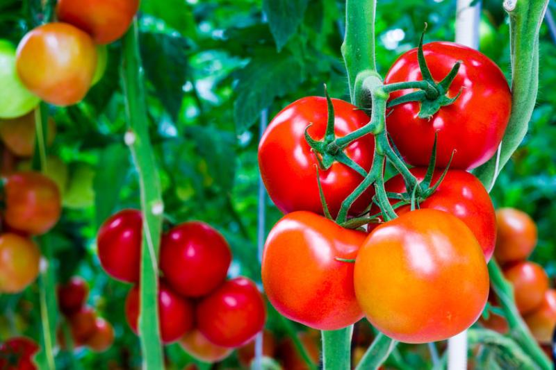 Khi mua rau không nên mua 4 loại này, đến người bán cũng chưa chắc ăn, nhiều người không biết vẫn dùng hàng ngày-2