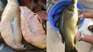 Bóc trứng cá thấy vật màu đỏ dài ngoằng nên bỏ ngay, đừng tiếc ăn vào mà hối hận