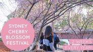 """Độc đáo lễ hội hoa anh đào siêu """"cute"""" sắp có mặt tại Sydney"""