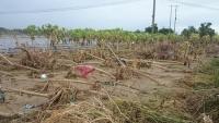 Úc viện trợ 40,000 đô giúp Việt Nam khắc phục hậu quả bão số 12