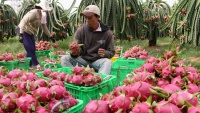 Năm 2018, nông sản Việt Nam xuất khẩu sang Úc tăng mạnh