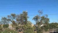 Người đàn ông Úc phải chặt cây trước nhà vì lý do khiến ai nghe cũng bức xúc thay