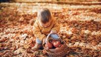 Những điểm ngắm lá mùa thu đẹp nhất Victoria