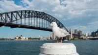 Úc cảnh báo người dân có thể nhiễm vi khuẩn siêu kháng thuốc khi tiếp xúc với chim