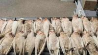 Adelaide: Vẹt mào trắng bỗng rơi xuống chết hàng loạt, mắt và miệng chảy máu