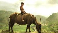 Cậu bé chăn trâu hỏi tiến sĩ về ý nghĩa cuộc sống: Bài học đáng giá hàng triệu đô