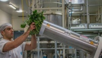 Úc biến súp lơ và bông cải xanh bỏ đi thành thảo dược
