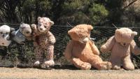 Nam Úc: Hàng rào gấu bông dài nhất thế giới sắp bị tháo dỡ