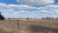 Nông nghiệp Úc chịu thiệt hại do hạn hán và căng thẳng thương mại