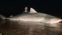 Úc: Khuất phục cá mập khổng lồ, nhóm ngư dân gây tranh cãi