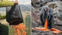 Úc dùng máy bay thả thức ăn cho động vật hoang dã bị ảnh hưởng bởi cháy rừng