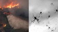 Hết cháy rừng đến lũ lụt, giờ nước Úc tiếp tục phải hứng chịu cơn mưa 'nhện độc' nguy hiểm nhất hành tinh