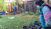 Người Việt bám trụ nghề cắt cỏ ở Mỹ: Chấp nhận tiếng 'cướp cơm'