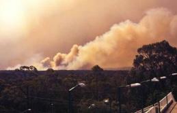 Úc: Các hội đồng địa phương đề nghị tăng cường ứng phó với biến đổi khí hậu để ngăn cháy rừng