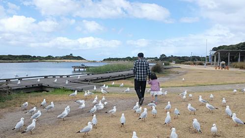 Để đưa vợ đi du lịch, chồng Việt đã học thuộc 200 trang luật giao thông tại Úc